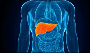 ما هو تحليل Ast المعدل الطبيعي لانزيمات الكبد تحاليلي