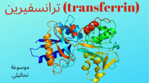 ترانسفيرين (transferrin)